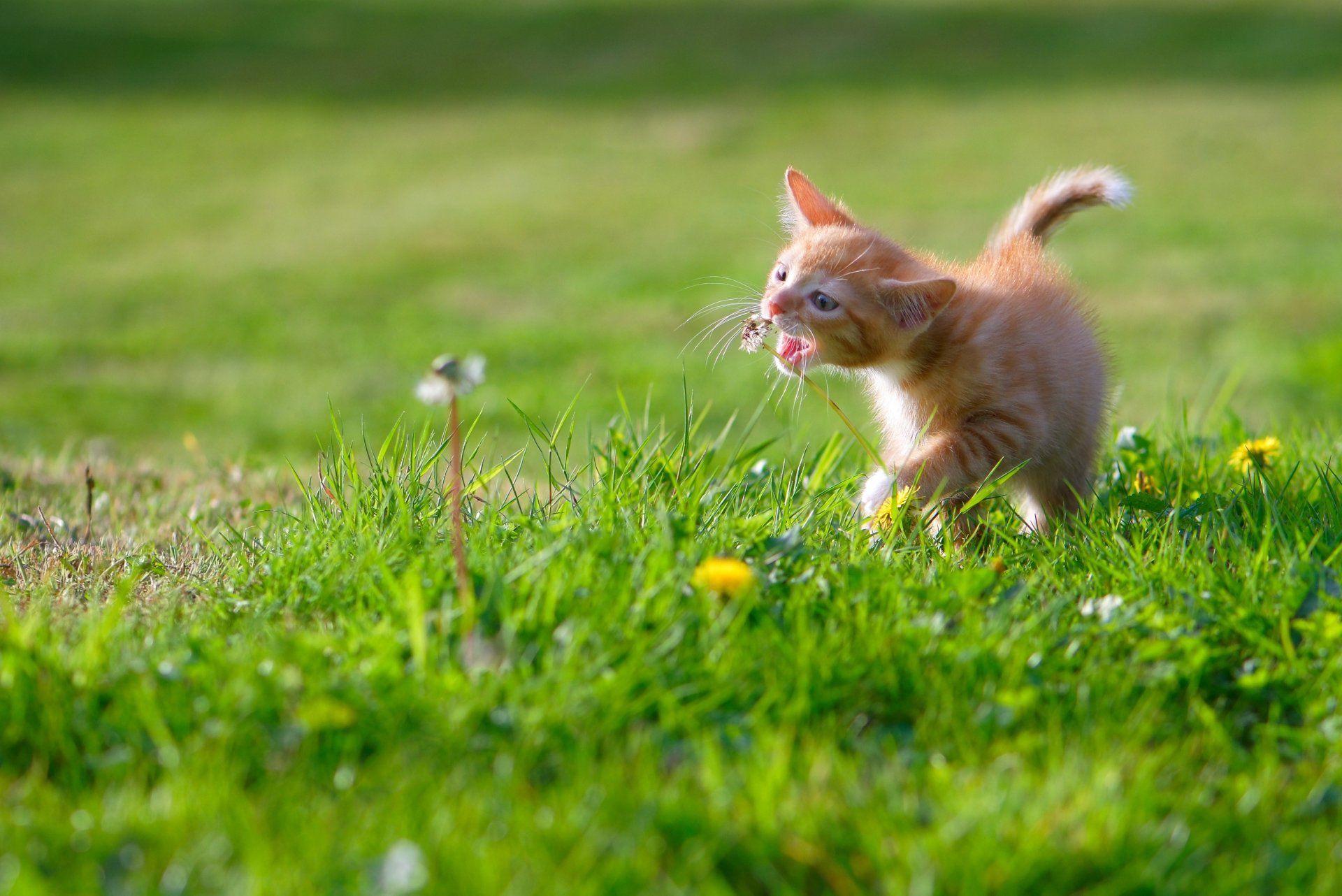辟谣:养猫的都遇到过,睡着后猫咪凑到脸边上,它到底在闻什么?