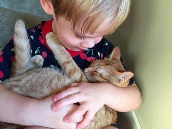 有小孩的家庭,尽量不要养猫 | 猫和小孩相处,会有3个危害