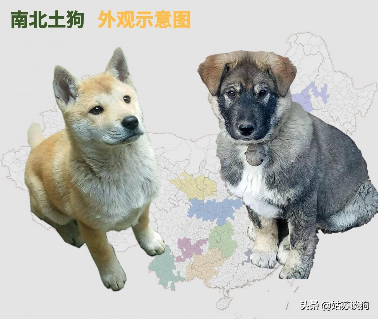 中国土狗,一个都不能少