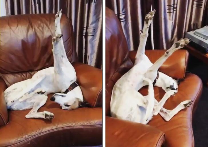 20張搞笑圖片:原來狗狗也可以這麽萌這麽可愛