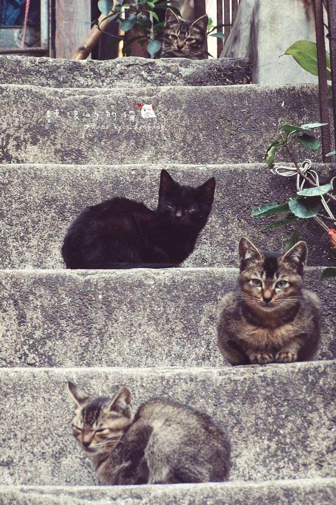 """""""藏猫于岛""""""""画猫充饥"""",厦门这两处大型网红撸猫场所一定要来"""