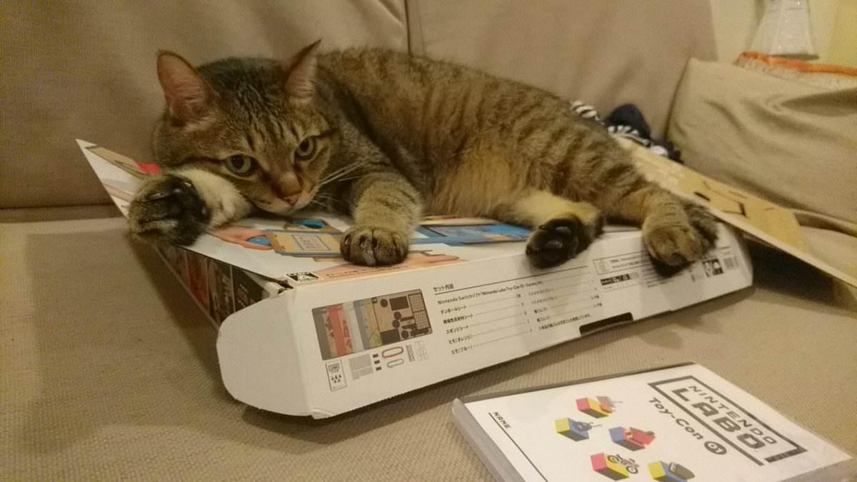 不要看猫打哈欠,不然我跟你讲,会笑到胃疼的