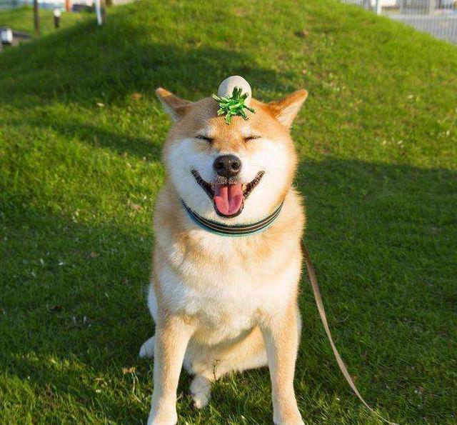 5种最难养的狗狗,最后一种太聪明难以驾驭