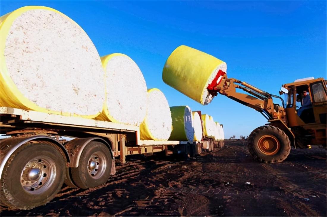 中方要禁澳大利亚棉花?澳政府还在了解,澳媒:不会有官方说明的
