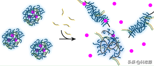 新型抗癌药物靶向纳米载体--用特定DNA序列触发药物释放