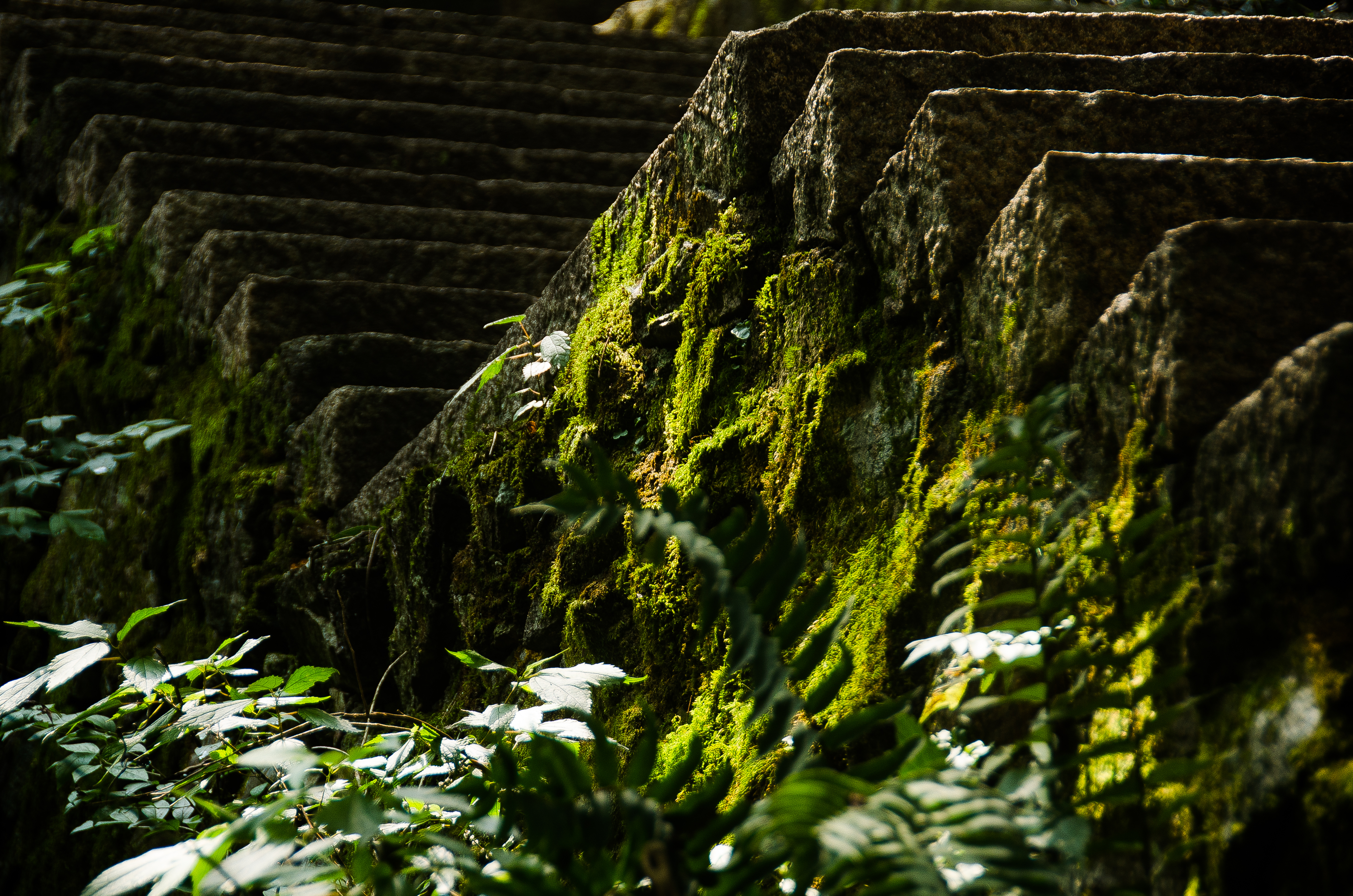 春季出游记,宁波的西南部竟藏着这么一个宝藏地,提前感受春满园