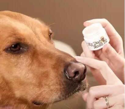 养狗小知识:狗狗是否健康,就看这5点