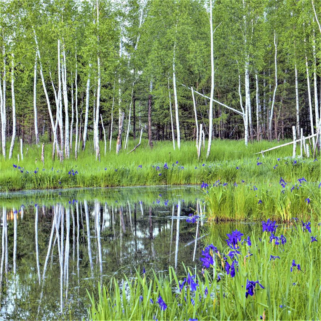伊春丨春天开始的地方