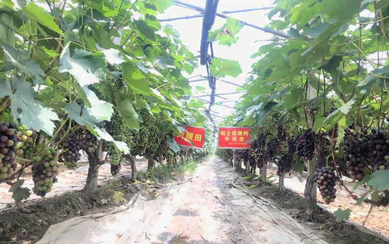 搞农业种植,一定要学会向科学技术要产量