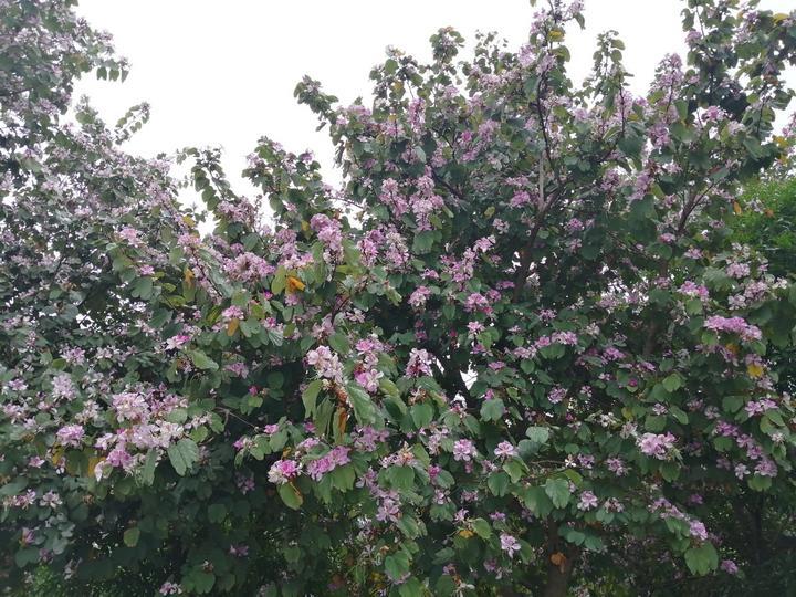 这些艳丽的花儿肆无忌惮地开放着,让马山县美不胜收
