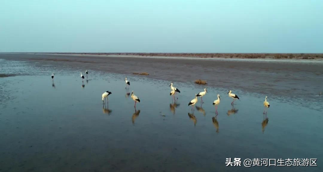 【黄河口生态旅游区】芦花飞鸟 秋之私语