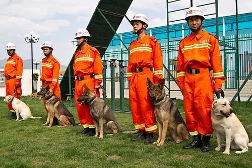 搜救犬:它们不会说话,却是点燃生命希望的英雄