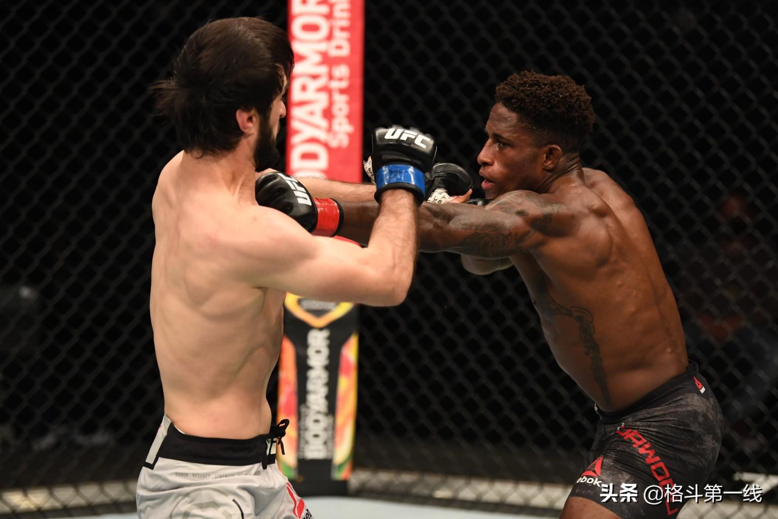 """UFC 253综述:""""黑龙""""轻松卫冕,""""波兰大锤""""成新冠军"""