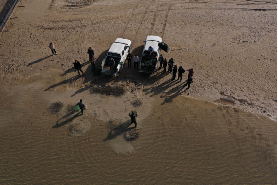 坚守生态保护 两万尾新疆大头鱼放流回故乡