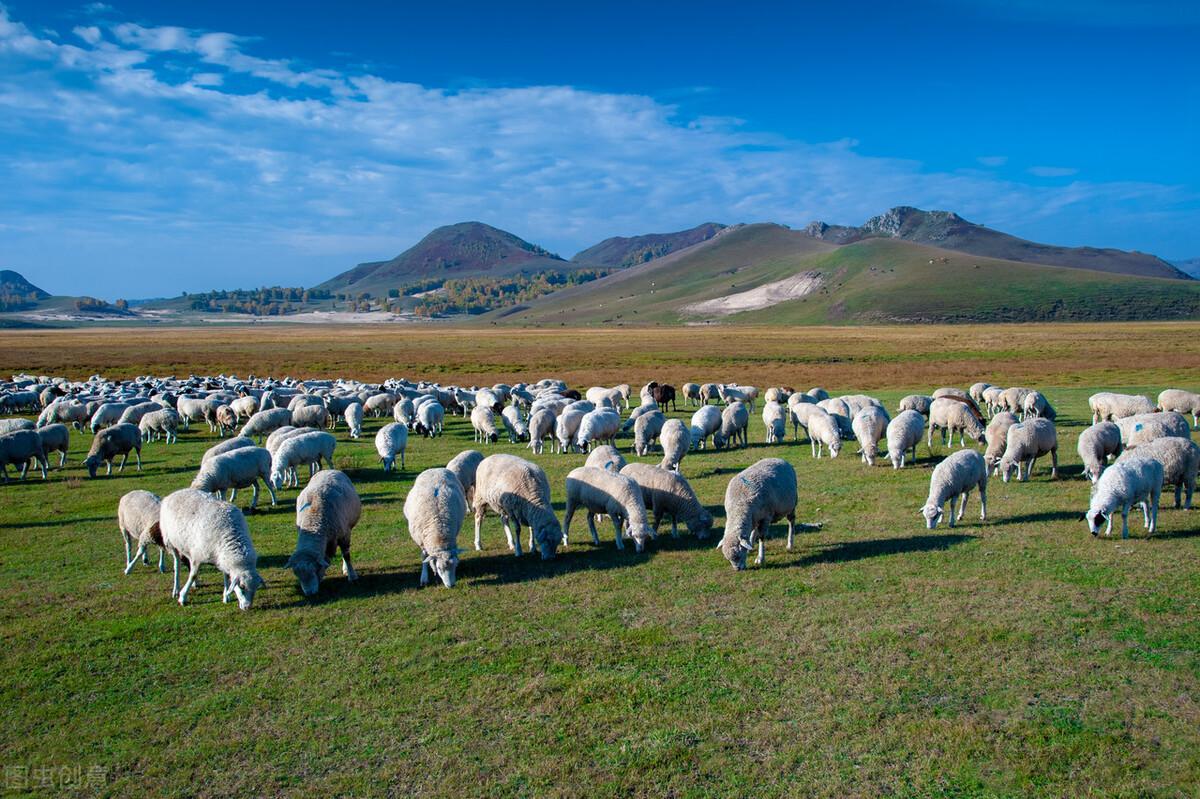 夏季来临羊该如何育肥呢?6个注意事项很关键