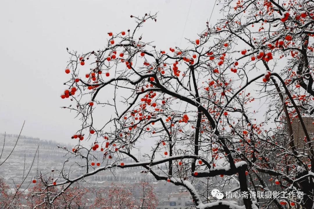 雪山、雪野、雪景 、雪夜与雪中吟咏