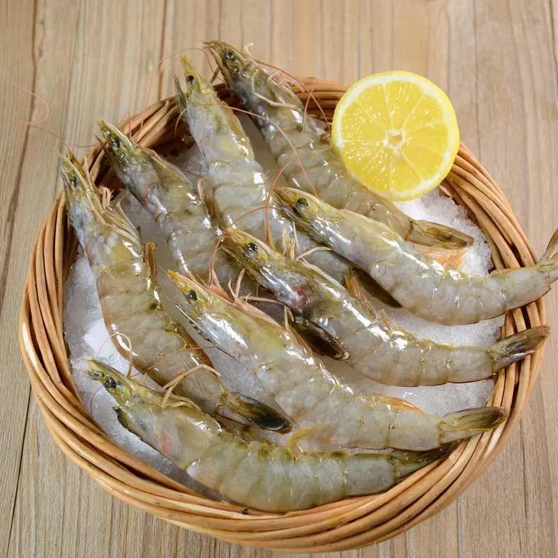 南美白对虾病虾的4个特征和5个诊断要点