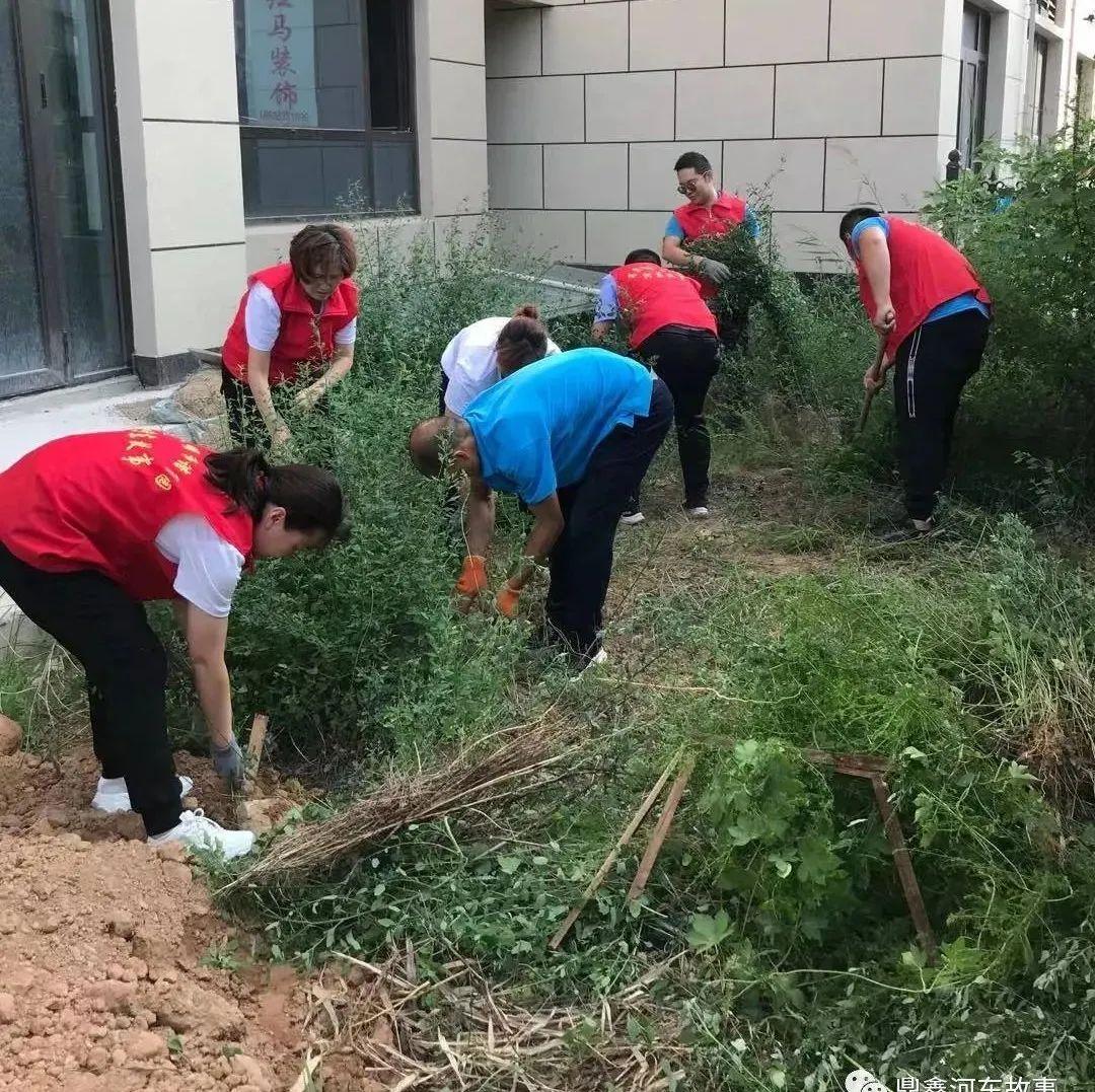 河东故事人员日常的工作点滴——清理杂草
