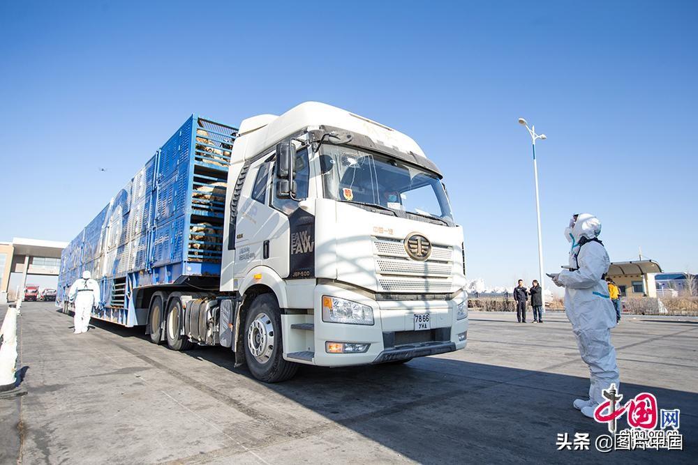 齐了!3万只蒙古国捐赠羊历时23天、分14批次抵达中国