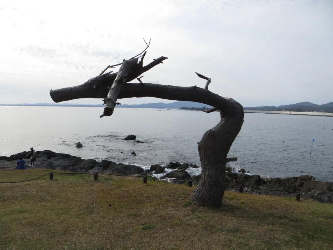 浴火重生——气仙沼 2011.3.11-2020.11.1