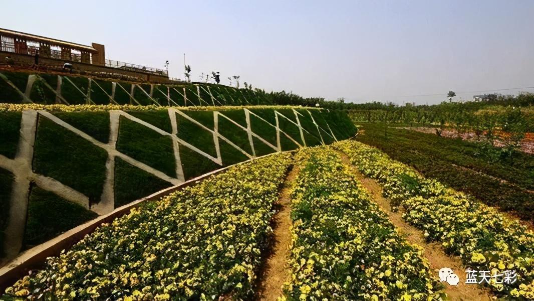 农业农村部重点扶持这28个项目,31项可申报的补助项目