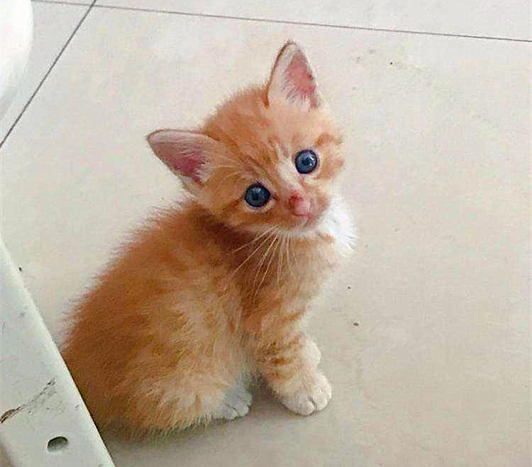 小橘猫的爱好有点独特,居然爱看《猫和老鼠》?还为此冷落铲屎官