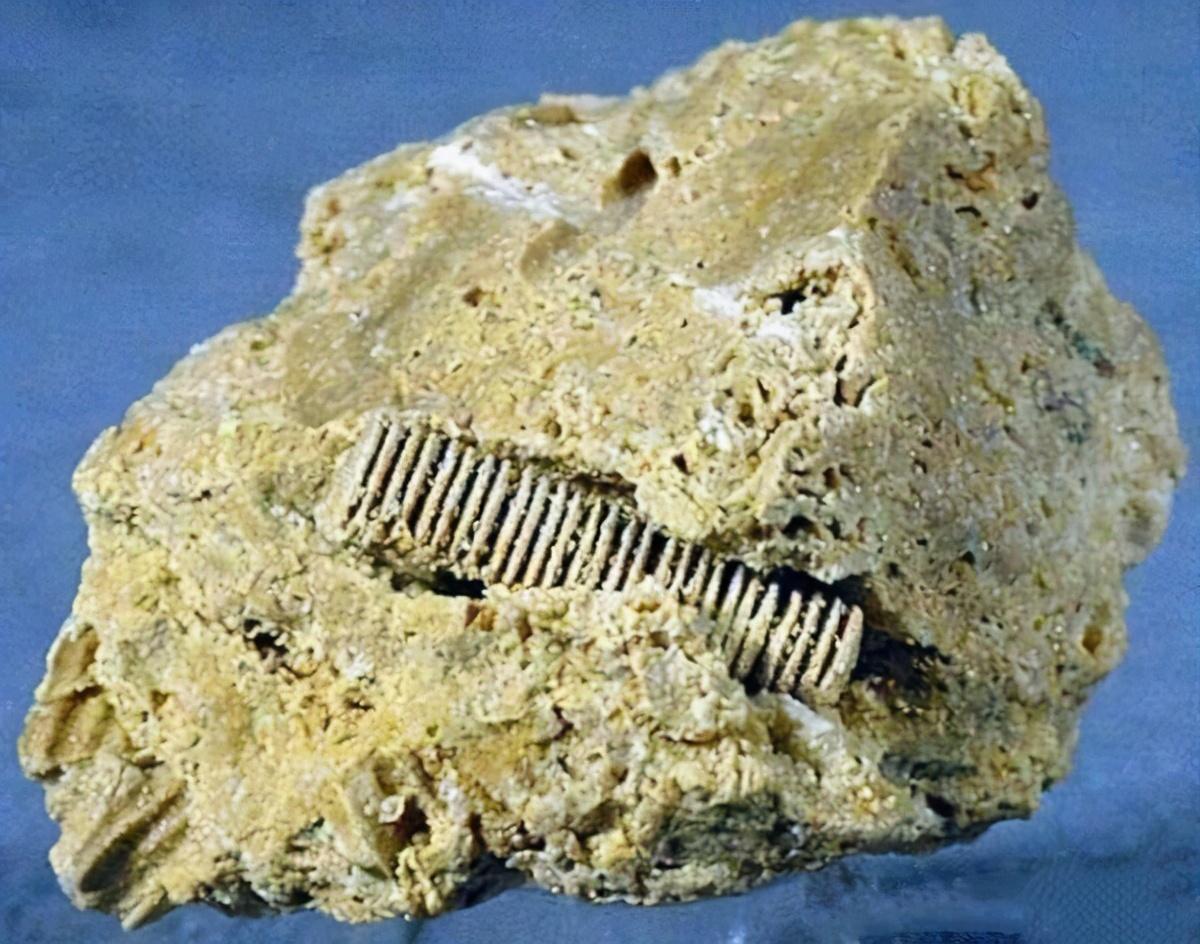 """地球上真有史前文明?化石中发现齿轮螺丝钉,主角是""""冬虫夏草"""""""