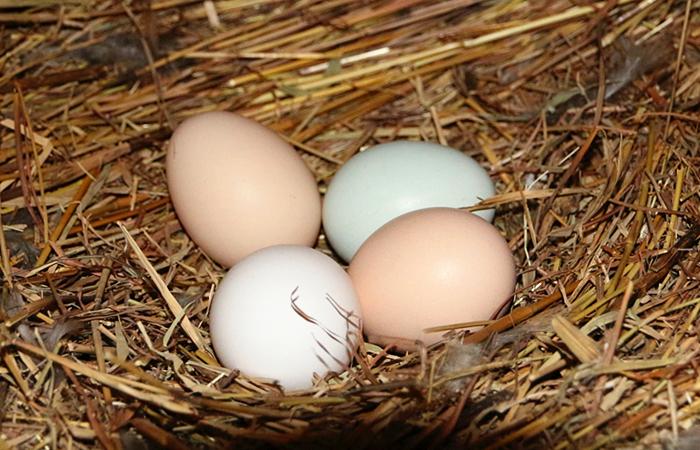 买鸡蛋时,白壳的、黄壳的、绿壳的有什么区别,哪个营养更好? 亨饪做法 第7张