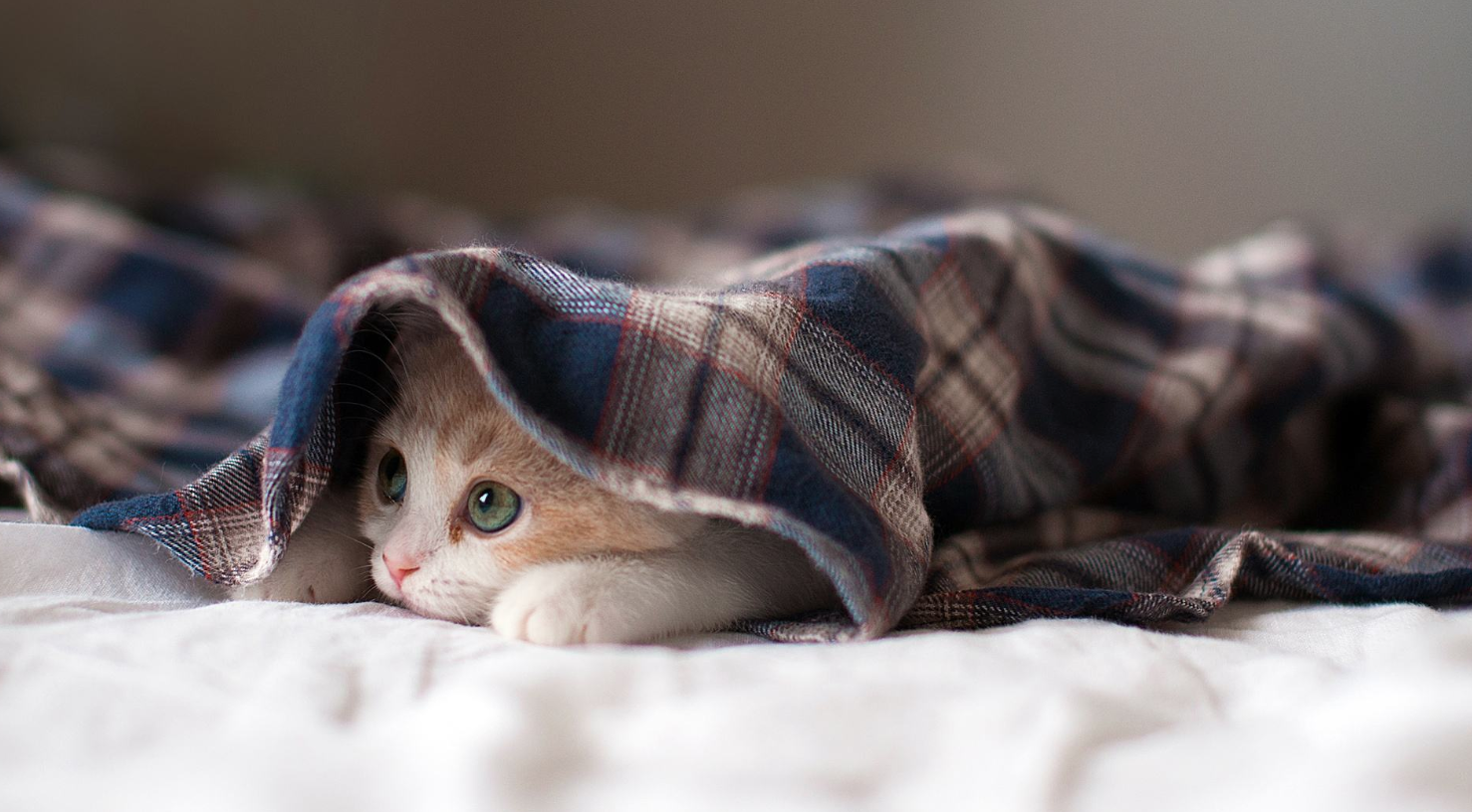 掌握这七条挑选猫咪的要点,不会买到病猫,不会上当受骗,请收藏!