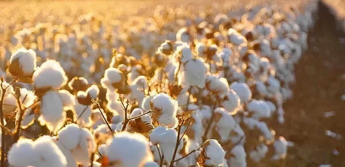 痛快!抹黑新疆棉花的罪魁祸首已被起诉,要求其立即道歉并赔偿损失