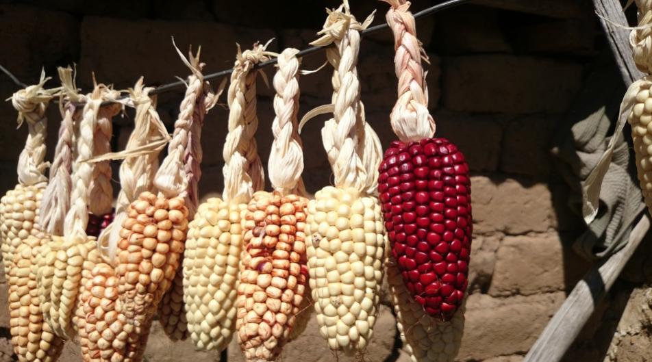 """拯救中国农业,从拯救""""老味道""""开始"""