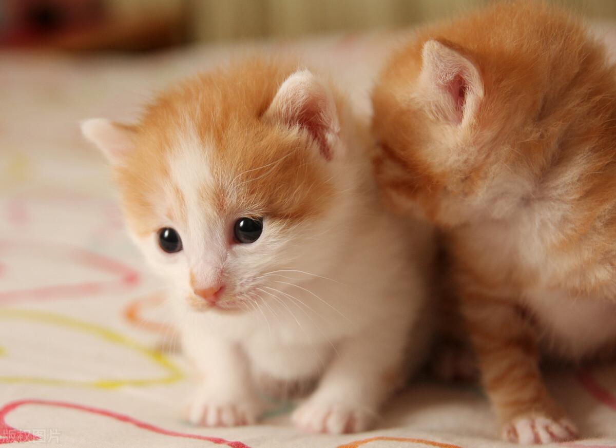 心理测试:哪只动物让你有保护欲,测你的身上最想改变什么缺点