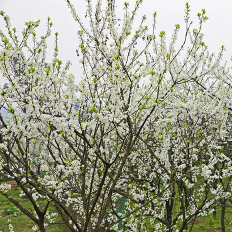 最适合懒人种的7种果苗,好养还吃不完,一年四季水果随吃随摘