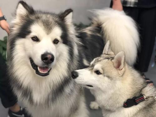 养公狗母狗的区别,想养狗的人建议收藏
