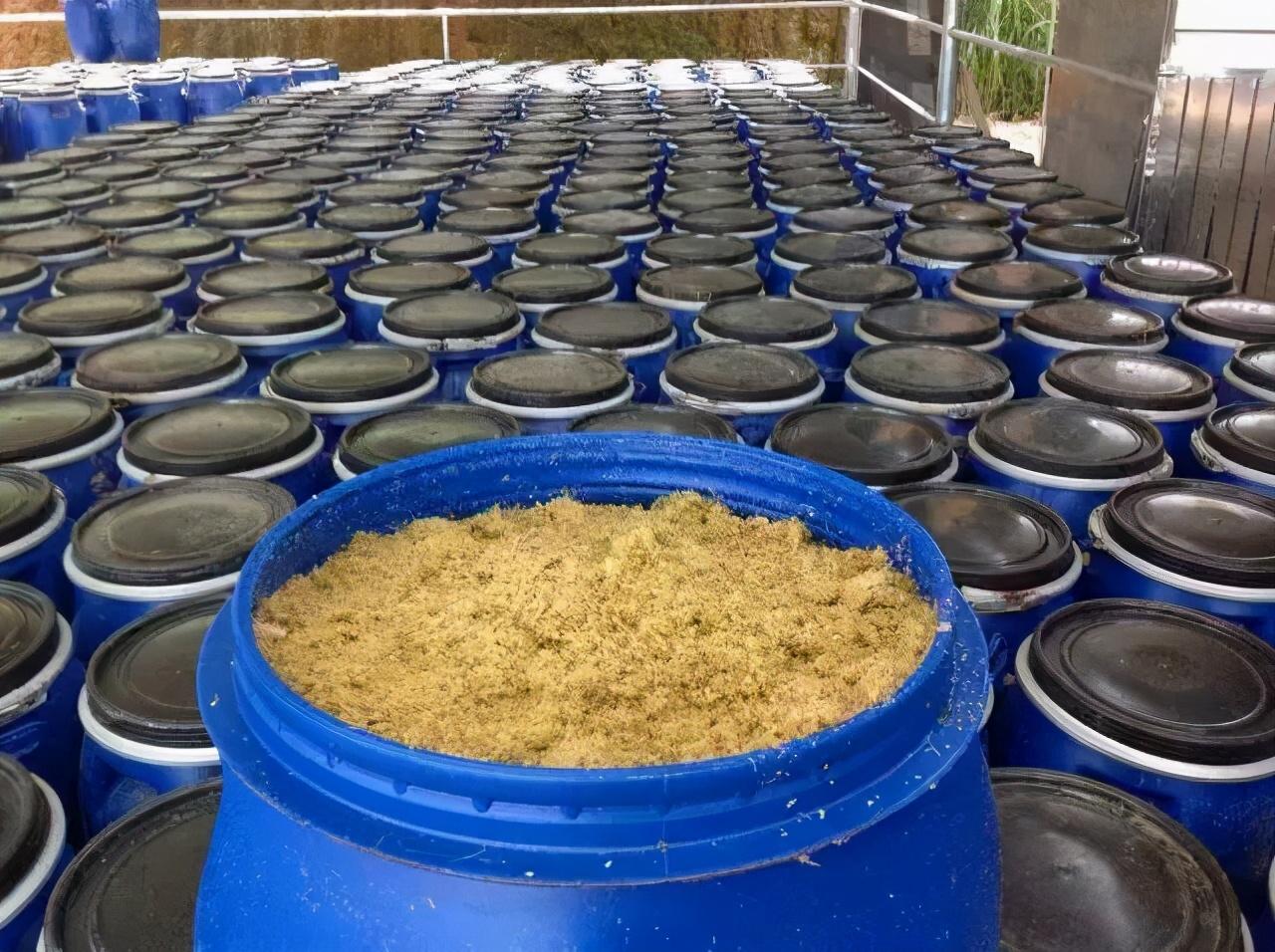 如何制作养鱼用的发酵饲料?要注意什么?我的养殖经验分享