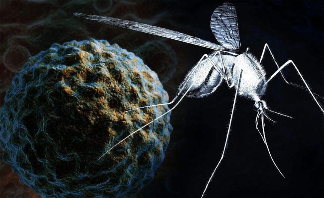 """""""全民公敌""""花蚊子,最开始到底是从哪来的?怎样消灭它?"""