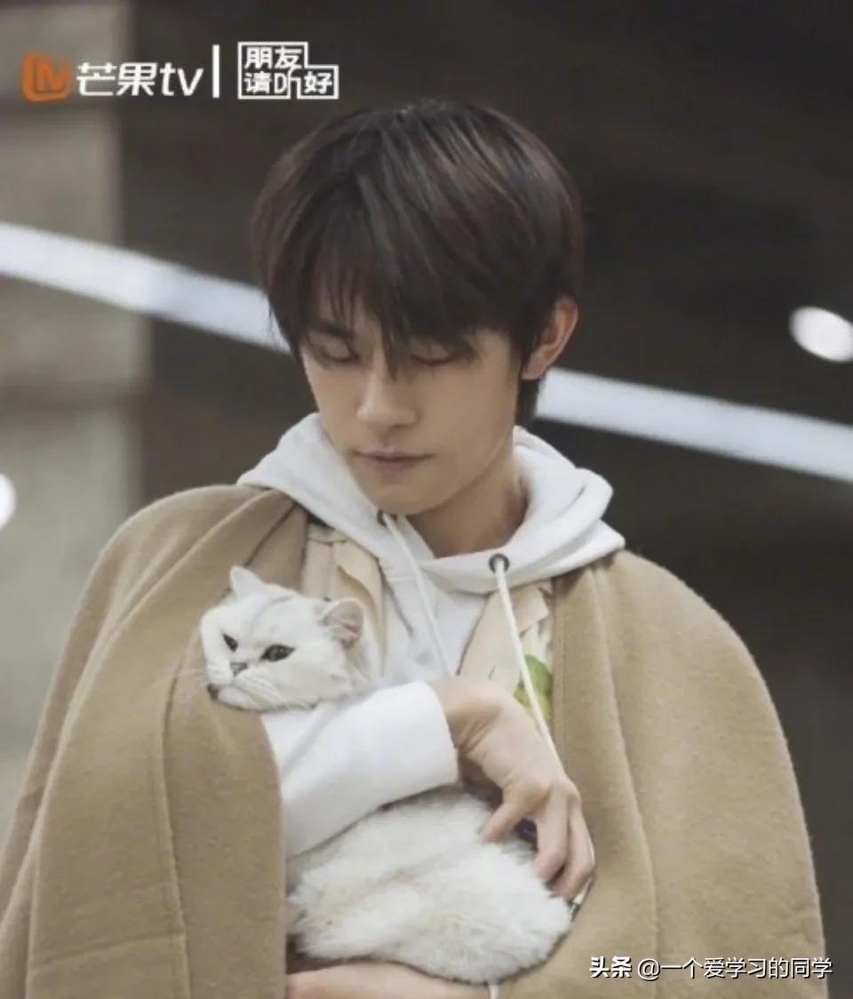 易烊千玺在家撸猫尽显温柔,连网友都酸了:我活得还不如一只猫。