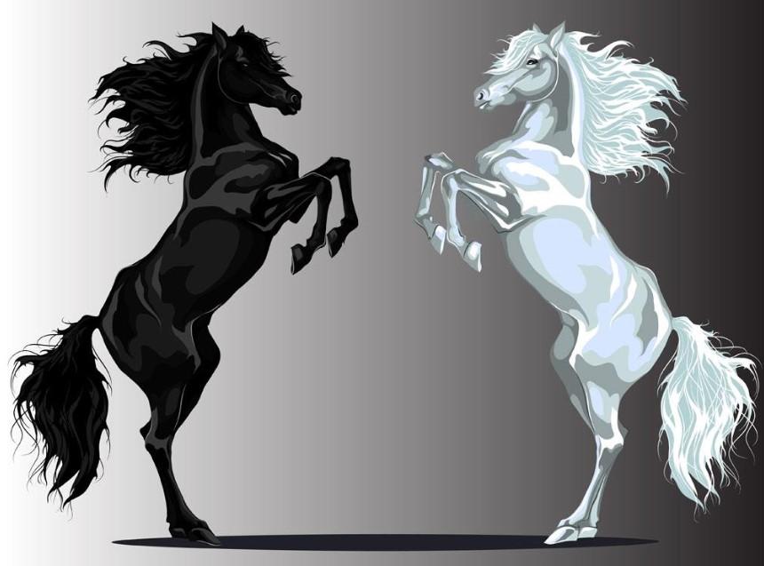 捉妖股、骑黑马:学会了,你就是股神