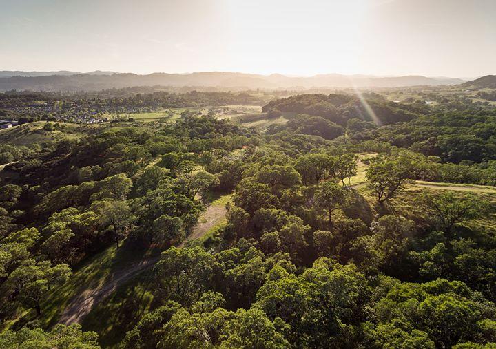 2020年山火再起,加州葡萄园还好吗?