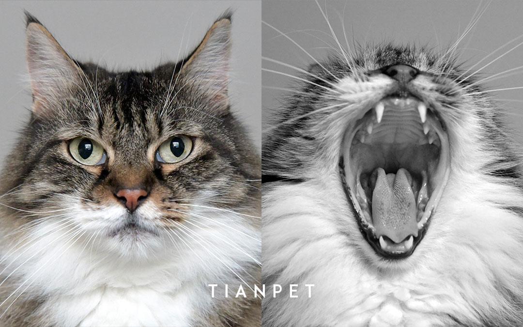 起根农村却受众城市宠物主追捧TIANPET(天宠)怎么做到的