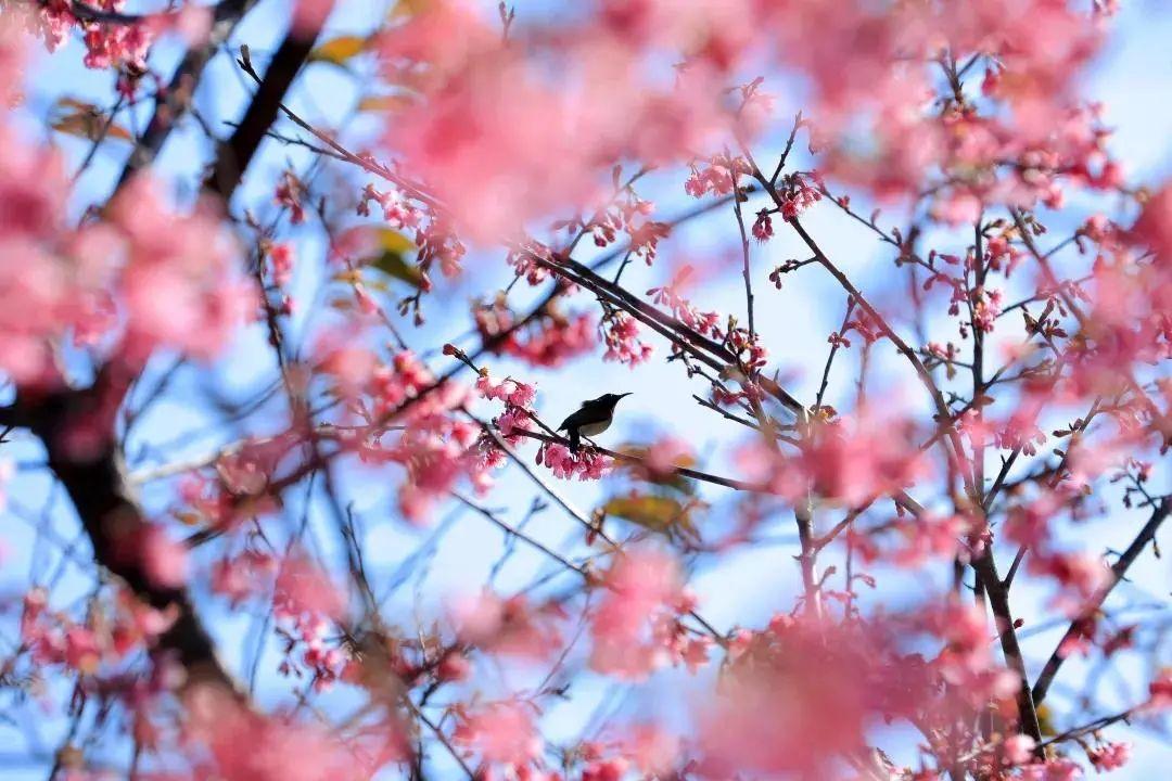 """""""乡约""""留厦的亲,春天来了!十大乡村自驾游线路送给你"""