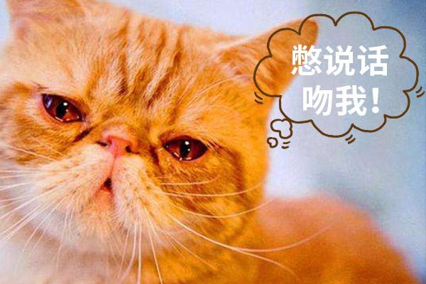 貓咪也會哭泣嗎?看完後感覺心碎了,尤其心疼第4隻貓咪