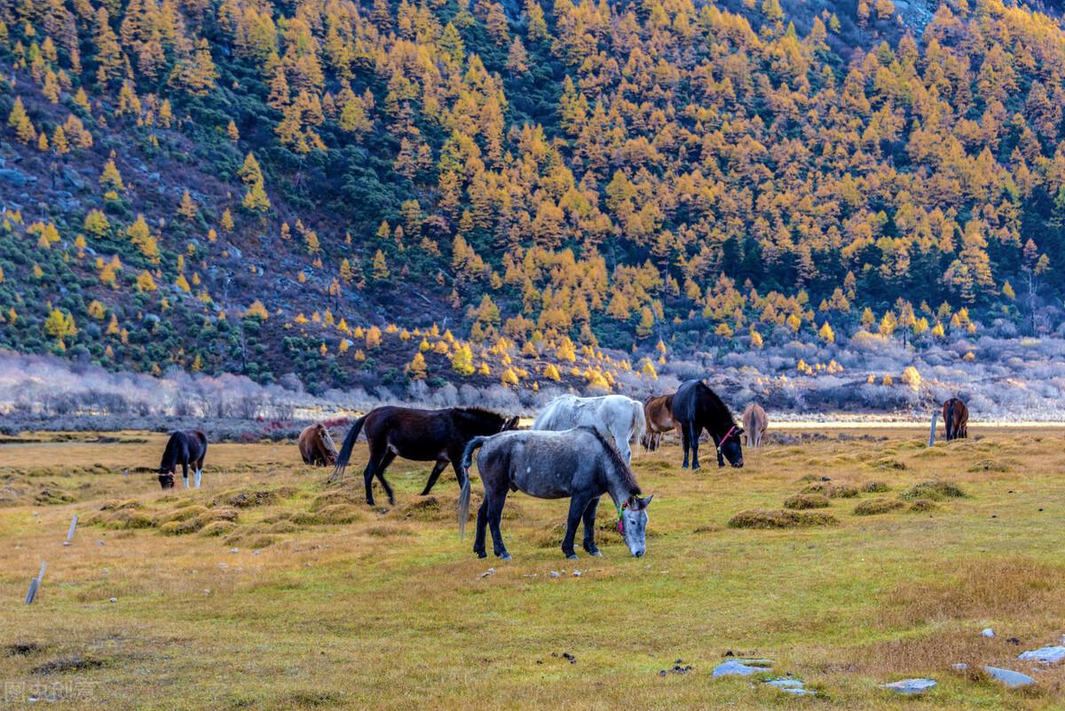 推荐春季最适合出游的5个旅游胜地,有山有水好风光