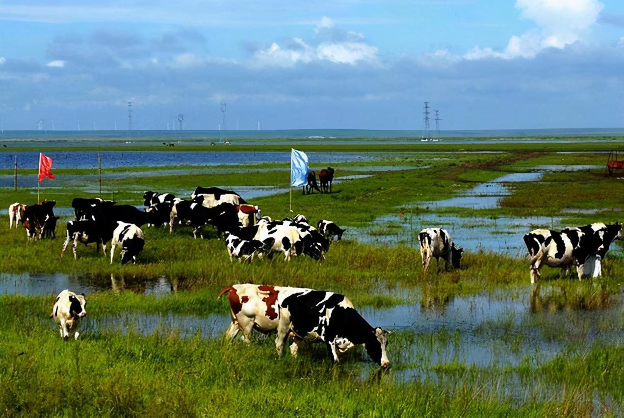 中国农业500强企业分布:四川、江苏各61家,内蒙古10家