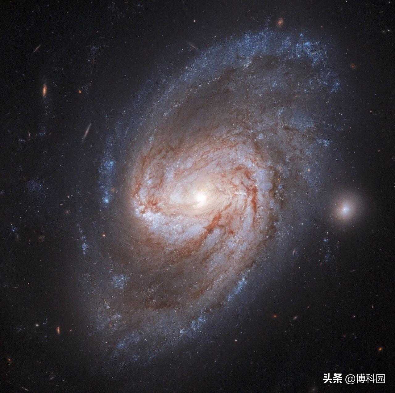 哈勃拍摄到:一张很美的条形螺旋星系,距离我们才9800万光年
