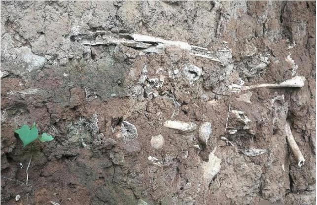 山西发现一处尸骨坑,没有一具是完整的,再现长平之战的残酷