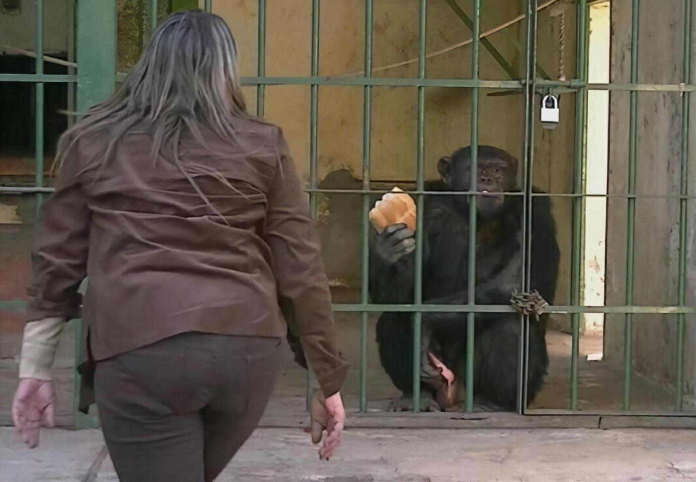 """比利时女子和黑猩猩真心相爱,却被""""棒打鸳鸯"""",她说:我错了吗"""