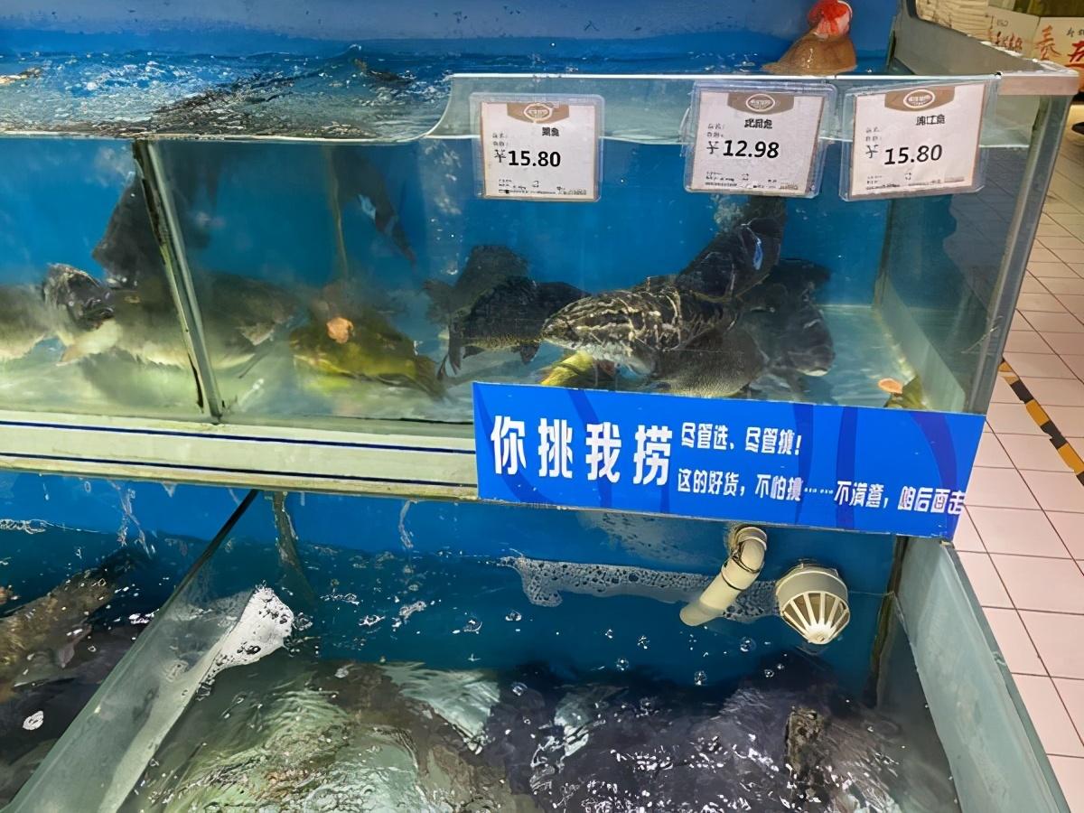"""""""失控""""的魚價:草魚一天一價"""