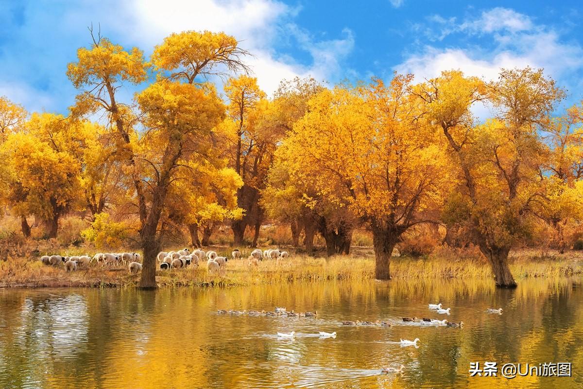 十月的南疆已经美成这样,太让人羡慕了