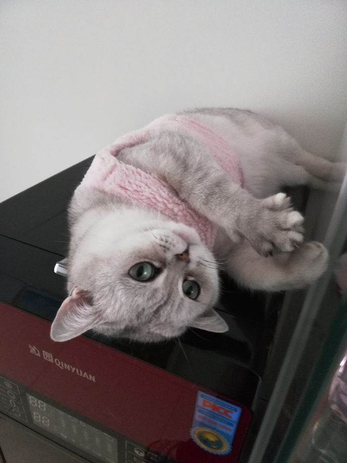 猜猜猫猫的哪些举动,说明已经爱上了你?